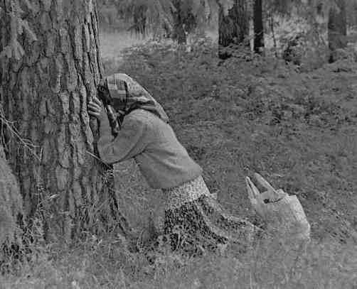 pogański kult świętych drzew